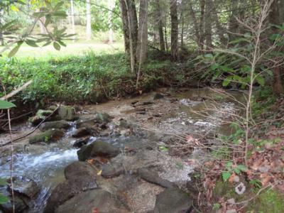 Rushing Walnut Creek