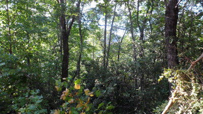 Franklin, Otto Residential Lots & Land For Sale: 00 West Poplar Trail