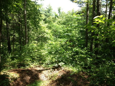 Brasstown Residential Lots & Land For Sale: Lot #43 Trillium Heights