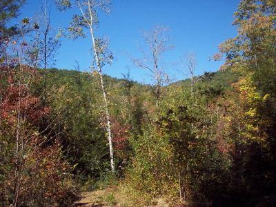 Murphy Residential Lots & Land For Sale: Lot 0 Greasy Creek Road