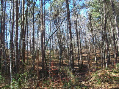 Murphy Residential Lots & Land For Sale: Lot 12 Mountain Top Road