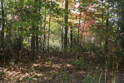 Topton Residential Lots & Land For Sale: 00 Holly Ridge