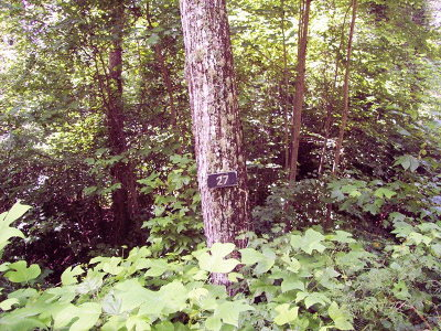 Murphy Residential Lots & Land For Sale: Lot #27 Thundering Hill
