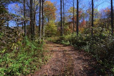 Robbinsville Residential Lots & Land For Sale: Ncsr1110 Long Creek Road