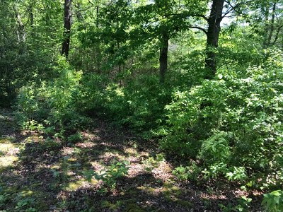Brasstown Residential Lots & Land For Sale: 000 Green Cove Road