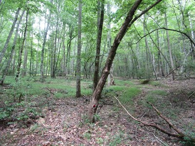 Brasstown Residential Lots & Land For Sale: Fox Hunter Trail