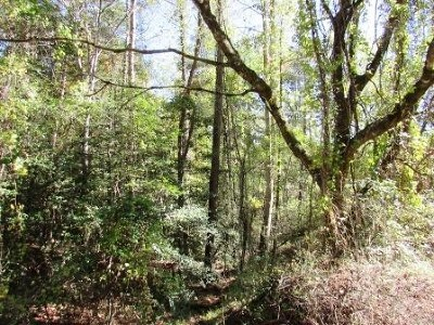 Murphy Residential Lots & Land For Sale: 00 Flowers Road