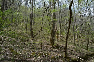 Murphy Residential Lots & Land For Sale: 100 Wallace Ridge Trail