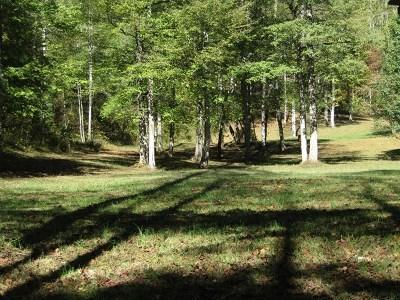 Murphy Residential Lots & Land For Sale: 19&20 Lightning Bug