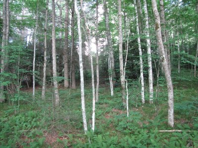 Hayesville Residential Lots & Land For Sale: 00 Wilderness Way