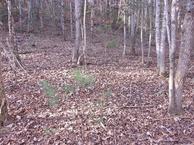 Murphy Residential Lots & Land For Sale: 57 Kramers Knob Road