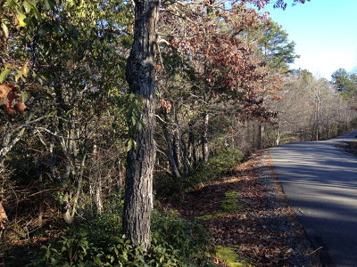 Murphy Residential Lots & Land For Sale: 000 Maggie Lane