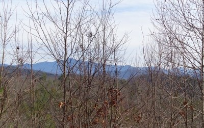 Hayesville Residential Lots & Land For Sale: 94.63 Fires Creek Road