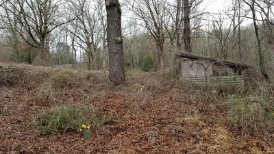 Hayesville Residential Lots & Land For Sale: 1514 State Highway 175
