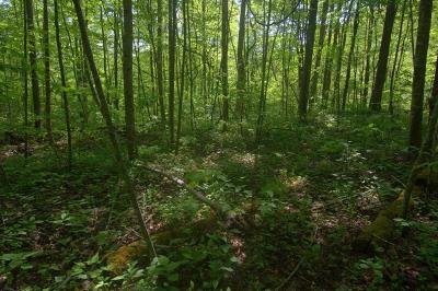 Robbinsville Residential Lots & Land For Sale: Sr 1242 Tuskeegee