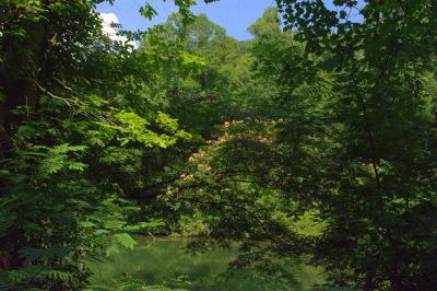 Robbinsville Residential Lots & Land For Sale: 00 East Buffalo Circle