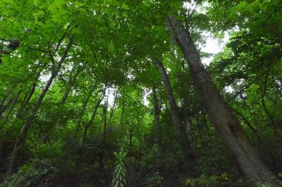 Robbinsville Residential Lots & Land For Sale: 00 Walnut Branch Rd