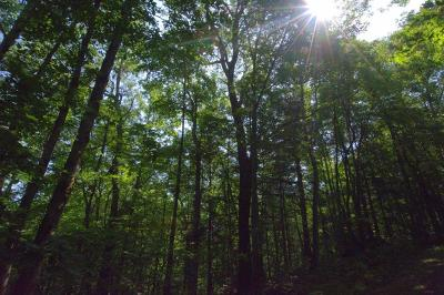 Robbinsville Residential Lots & Land For Sale: L-50 Snowbird Trail