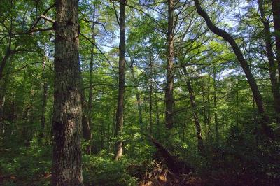 Robbinsville Residential Lots & Land For Sale: L48 Snowbird Trail