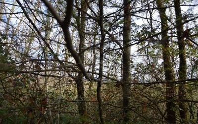 Hayesville Residential Lots & Land For Sale: 5a & 3a Shearer Creek