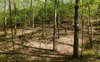 Brasstown Residential Lots & Land For Sale: Lot 14 Deer Trace