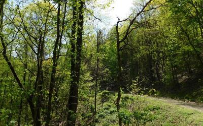 Brasstown Residential Lots & Land For Sale: Lot 17 Hidden Springs Drive