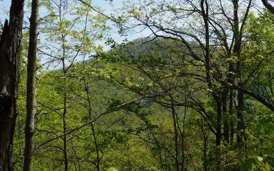 Brasstown Residential Lots & Land For Sale: Lot 24 Panther Trace