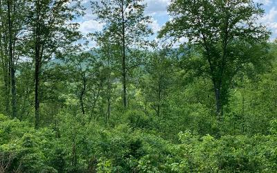 Hayesville Residential Lots & Land For Sale: 12.53 Ac Gribble Edwards