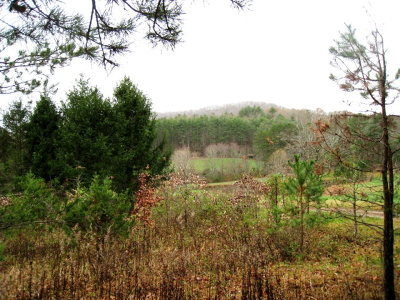 Murphy Residential Lots & Land For Sale: 19.25ac Lower Bear Paw Rd