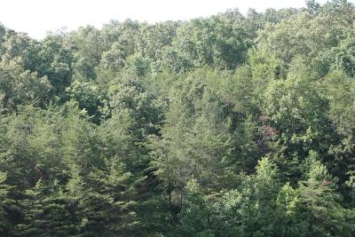 Murphy Residential Lots & Land For Sale: 3685 Candy Mountain
