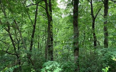 Hayesville Residential Lots & Land For Sale: Lot 50 A Eagles View