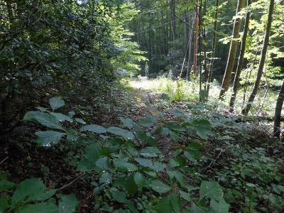 Robbinsville Residential Lots & Land For Sale: 00 E Upper Sawyers Creek