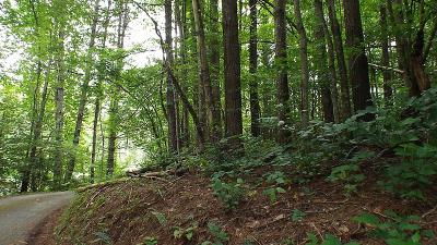 Robbinsville Residential Lots & Land For Sale: Lot 38 Riverview Road