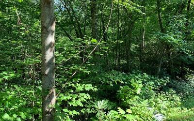 Hayesville Residential Lots & Land For Sale: Lot 12 Chairmaker