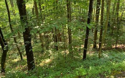 Hayesville Residential Lots & Land For Sale: Lot 12a Chairmaker