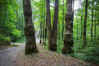 Hayesville Residential Lots & Land For Sale: Lot 5 Shooting Creek Trail
