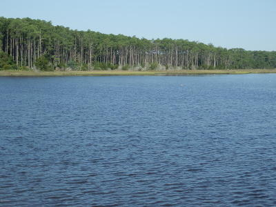 Williston Residential Lots & Land For Sale: 280 Donnie Davis Road