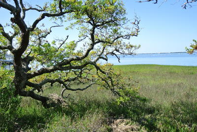 Beaufort NC Residential Lots & Land For Sale: $225,000