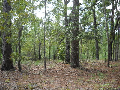 Boiling Spring Lakes Residential Lots & Land For Sale: 80 Greensboro Road