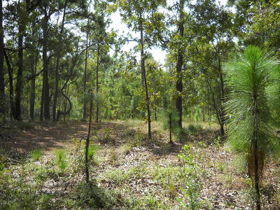 Boiling Spring Lakes Residential Lots & Land For Sale: 60 Greensboro Road