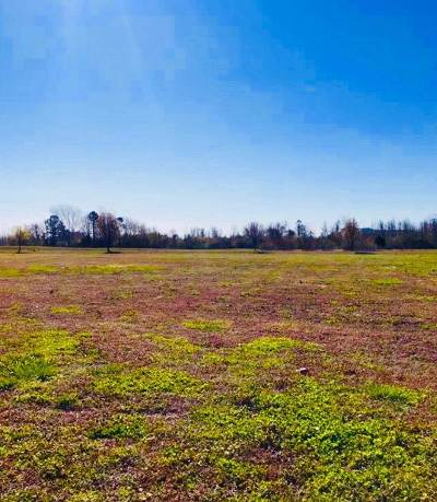 Residential Lots & Land For Sale: 146 Pelican Pointe Drive