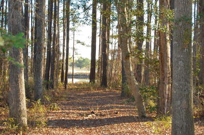 Residential Lots & Land For Sale: 330 Loblolly Drive