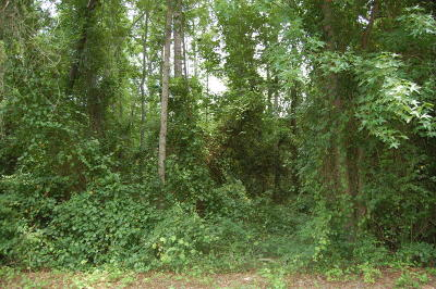 Residential Lots & Land For Sale: 809 Elderberry Drive