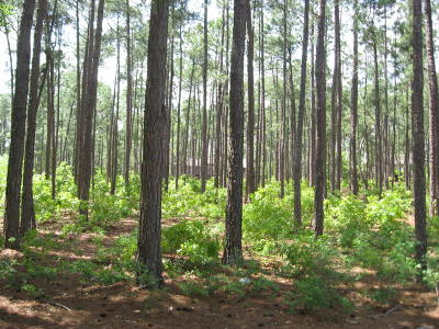 Pinewild Cc Residential Lots & Land For Sale: 18 Abington Drive