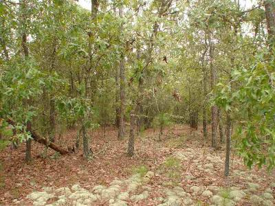 Residential Lots & Land For Sale: 31 Wildlife Lane