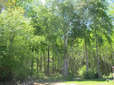 Pinebluff Residential Lots & Land For Sale: S Apple St.