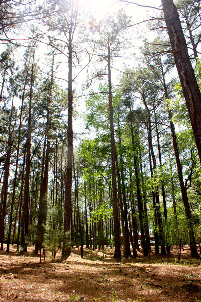 Whispering Pines Residential Lots & Land For Sale: 45 Martin Drive