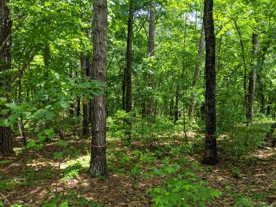 Southern Pines Residential Lots & Land For Sale: 116 Edinboro Drive