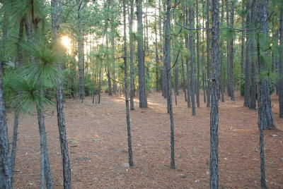 Southern Pines Residential Lots & Land Active/Contingent: 9 Scots Glen Drive