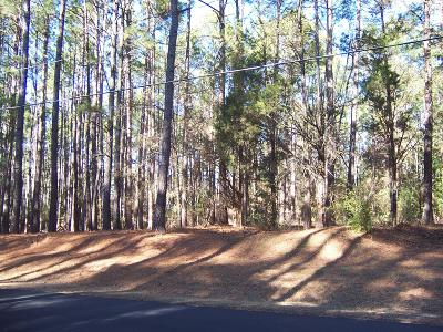 Pinehurst Residential Lots & Land For Sale: 185 Lake Dornoch Drive